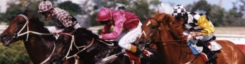 Rosehill Guineas 23/03/96 - 1st Octagonal - D Beadman, 2nd Saintly - P Payne, 3rd Nothin Leica Dane - R S Dye ******